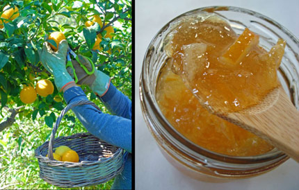 1-Marmalade-Beginning-copy