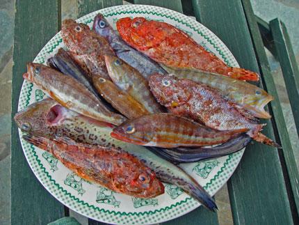 Fish-small-BOUYABESSE_430