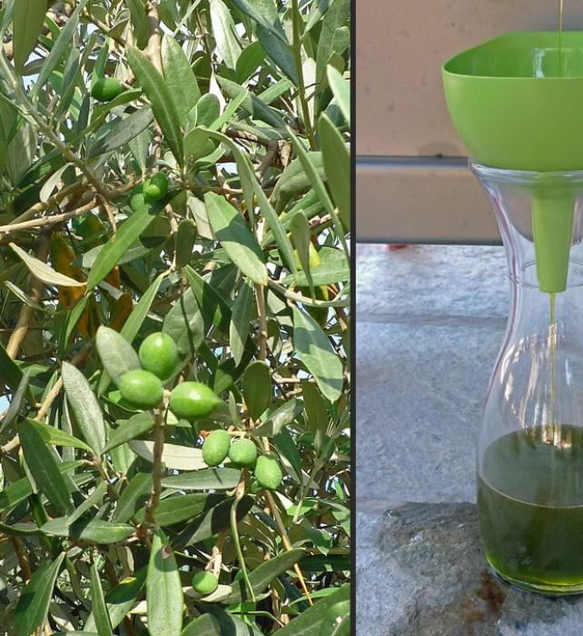 1-2-olives-oil