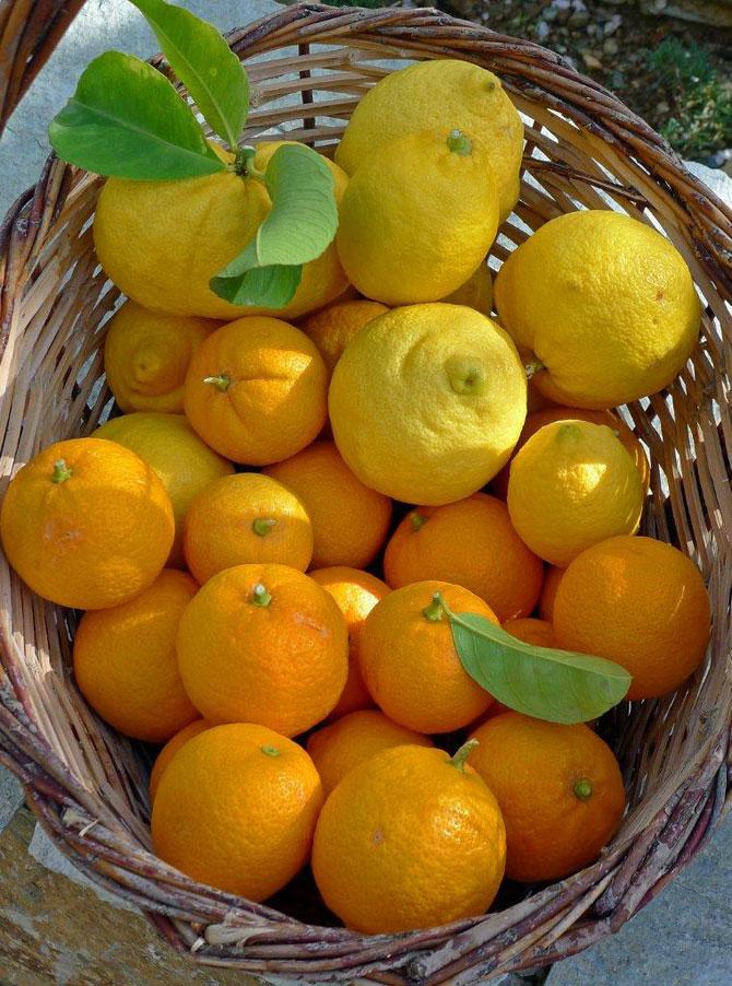1-lemons-bitter-oranges670