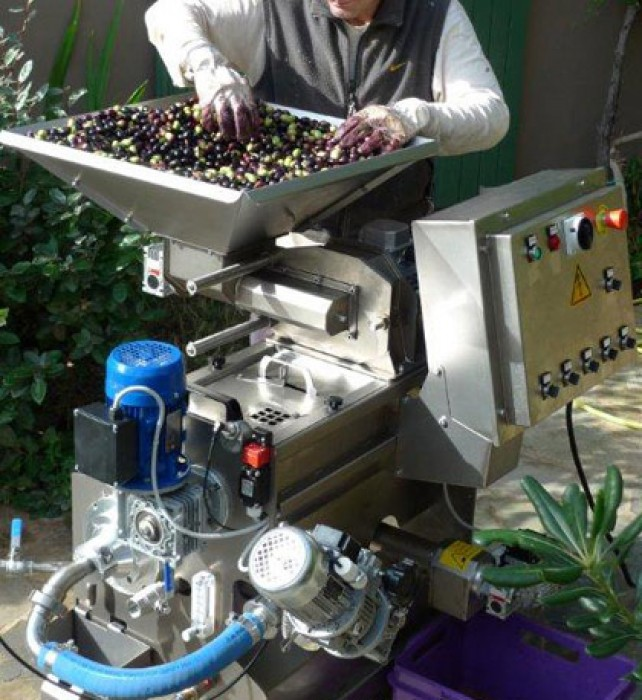 Tossing the olives as they slowly fall into the grinder.