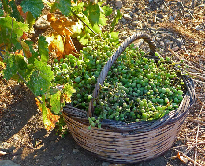 2_grapes_basket_small