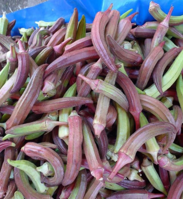 Reddish okra in the market