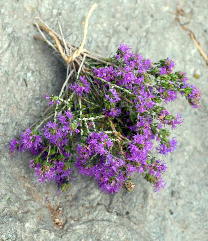3-thyme-1-small