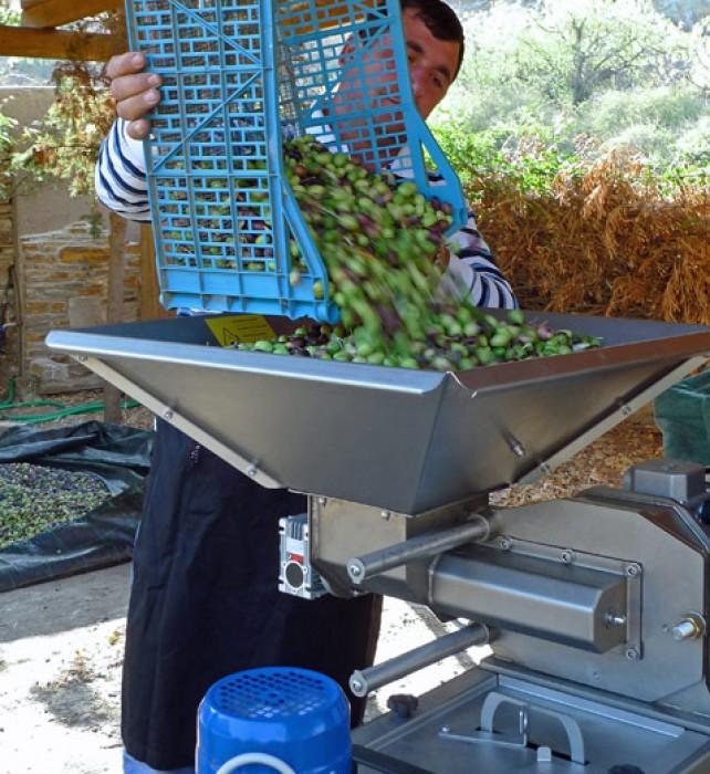4-olive-pressing-stathi