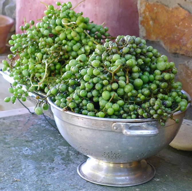 4_grapes_colander_small