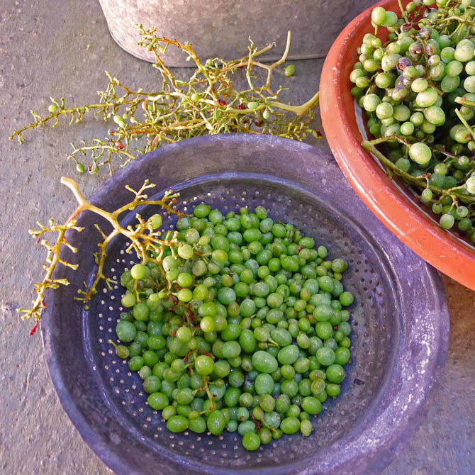 5_grapes_stems1_small