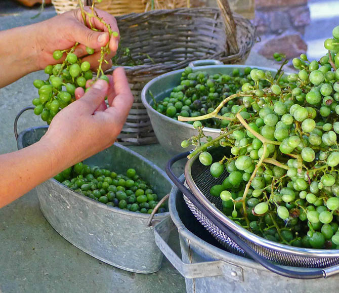 5a_grapes_stems_small