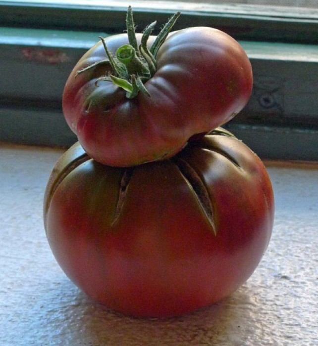 Costas and I debate if we should salvage more tomatoes, cutting them while firm, and half-green, and letting them ripen in the room.