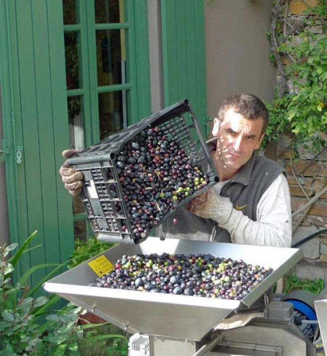 Costas feeds the olive press.