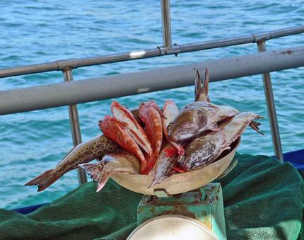 Drakena-etc-for-fish-soup_430