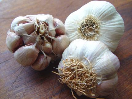 Garlic-pink_430
