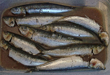 sardine-MARINATEDpost1_430