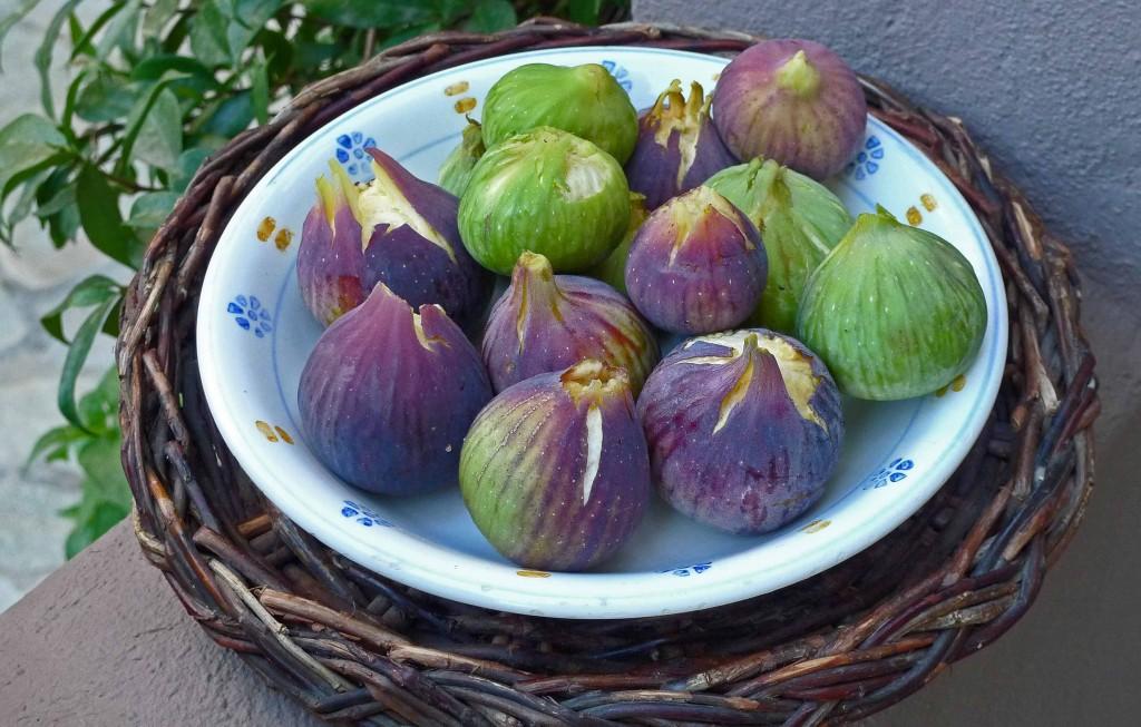 Figs purple & green S