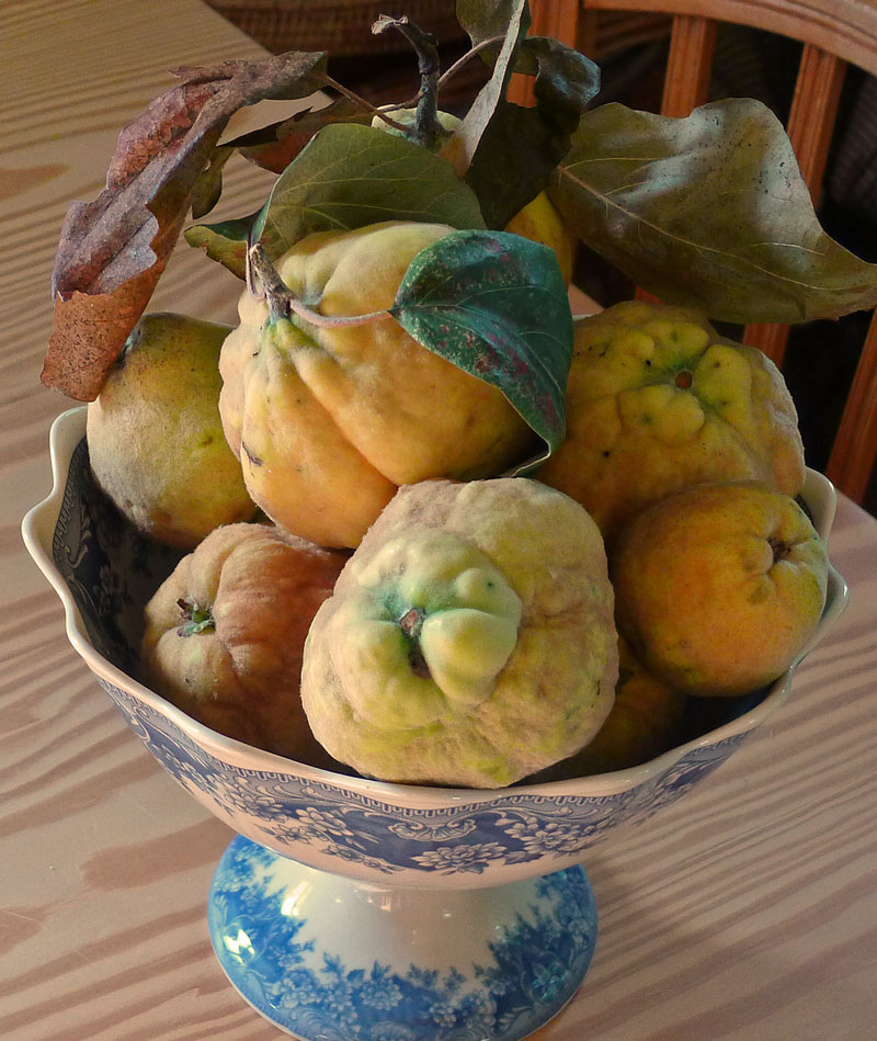 quince-in-bowl-sw